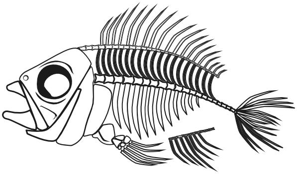fish skeleton 2 BW - /animals/aquatic/fish/fish_skeleton/fish_skeleton ...