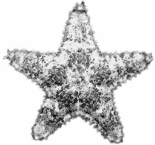 Clip Art Starfish. starfish full