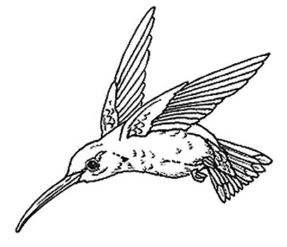 Cartoon Kingfisher 15532096 as well Fliegende Taube 3 as well Tijd moreover 23845 in addition Bird Outline Drawing. on the kingfisher