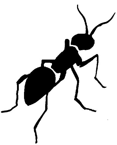 مورچه و بروکراسی