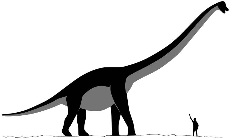 Sauroposeidon dinosaur...