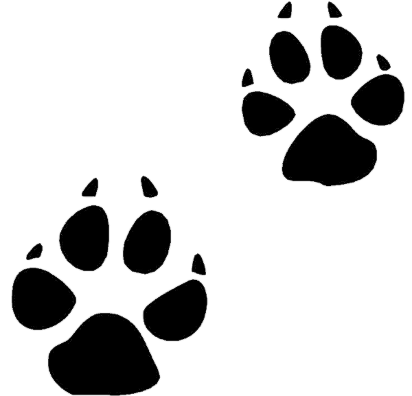 coyote tracks   animals  mixed  animal prints  coyote tracks png html cheetah paw print vector Cheetah Print Background