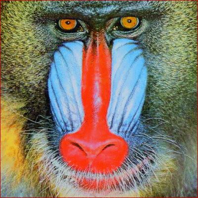 baboon face - /animals/primates/baboon/baboon_face.png.html