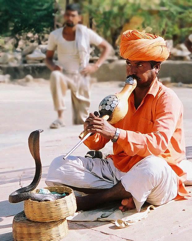 Snake Charmer - Jaipur - India | 2__DSC2489 | Joao Eduardo ...