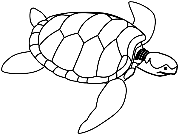 green sea turtle lineart