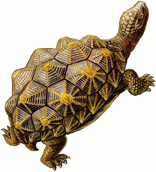 turtle walking - /animals/turtle/prehistoric/prehistoric_turtle ...