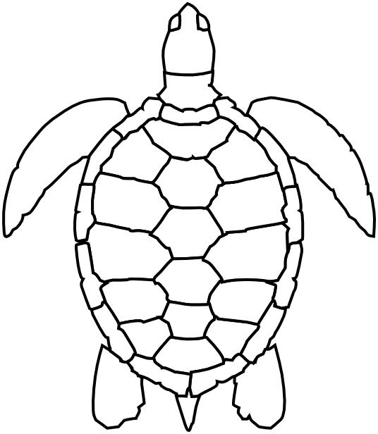 Line Art Turtle : Sea turtle lineart animals