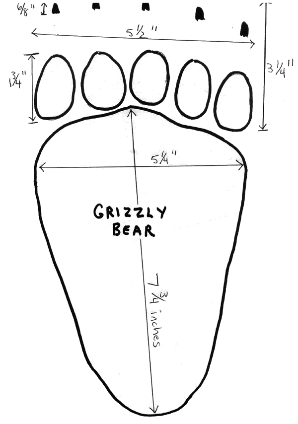 grizzly bear track - /animals/B/bears/grizzly/grizzly_bear_track.png.html