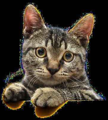 cat face striped tabby animalscatscatphotoscatface