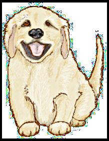 golden retriever puppy - /animals/dogs/G/Golden_Retriever/golden_retriever_puppy.png.html