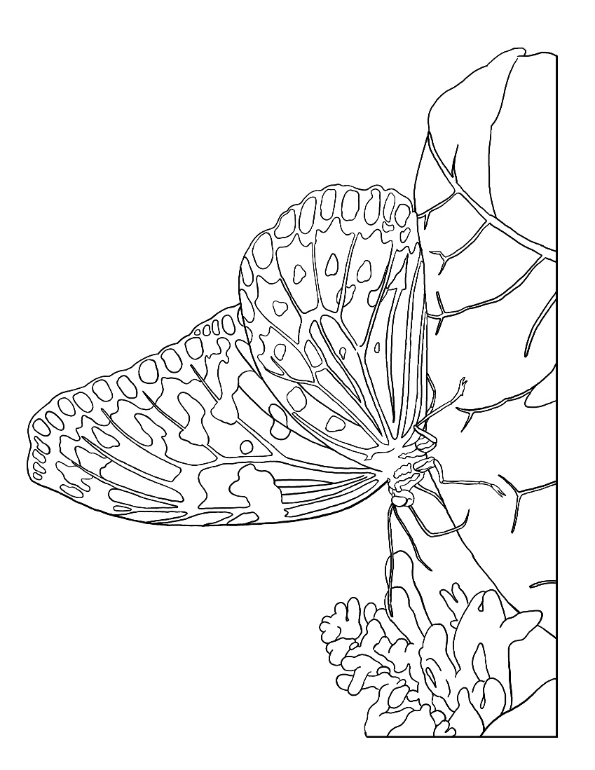 coloring pages moth in moonlight - photo#10
