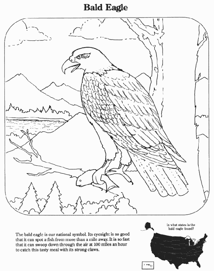 Bald eagle education coloring pages endangered species for Endangered species coloring pages