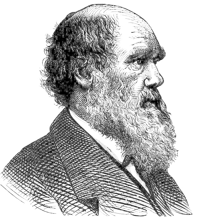 Famous Line Art Paintings : Charles darwin profile lineart famous science