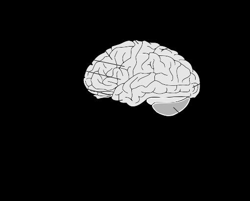 brain diagram - /medical/anatomy/brain/brain_diagram.png.html