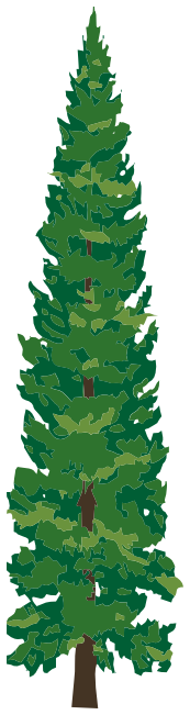 pine tree 1   plants  trees  evergreen  tall pines  pine tree clipart plants flowers clipart plants flowers