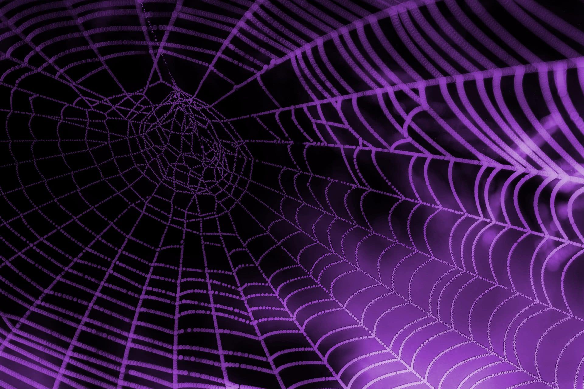 spider web purple   scenic  wallpaper  animals  spider web purple jpg html clip art spider web background clip art spider webs pictures