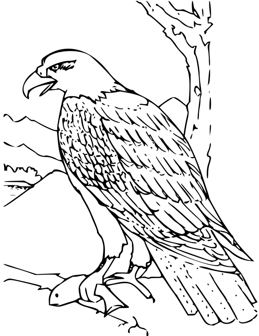 coloring book bald eagle   education  coloring pages superman logo with different letters and colors customized superman logo with different letters