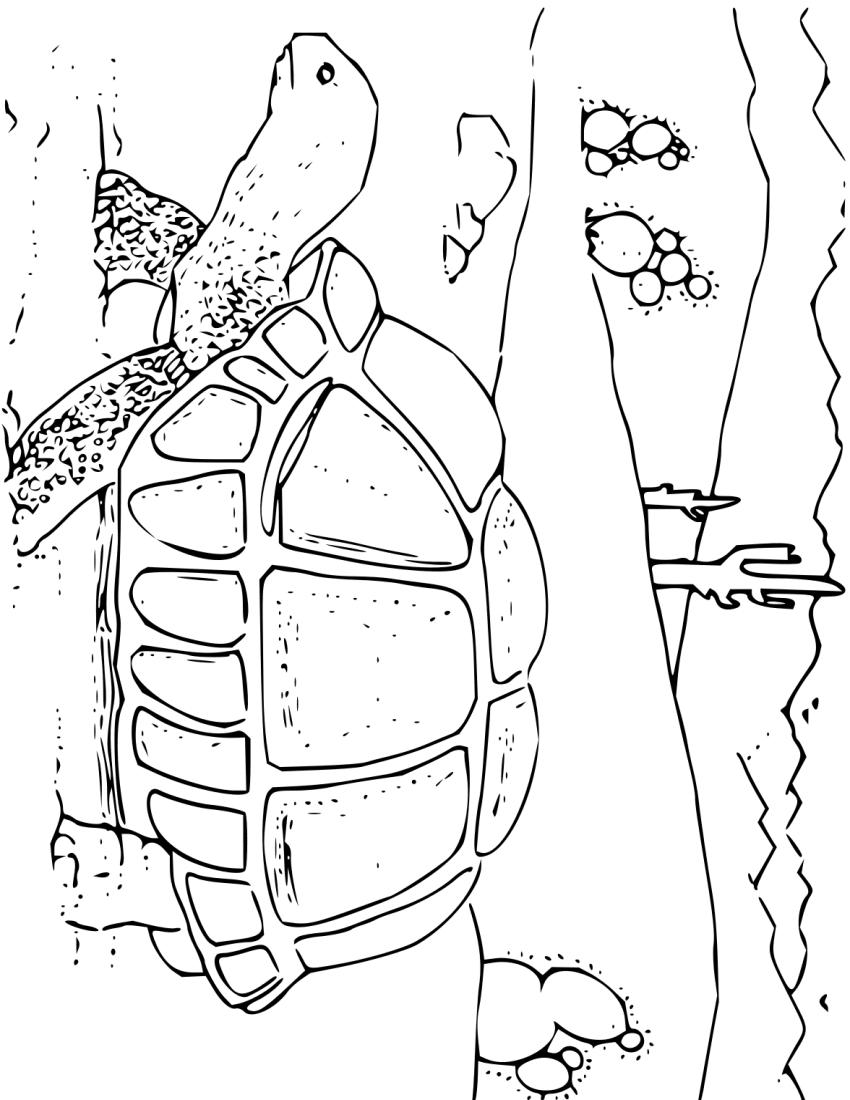Coloring Book Desert Tortoise Education Coloring_pages Animals Coloring_book_desert_tortoise