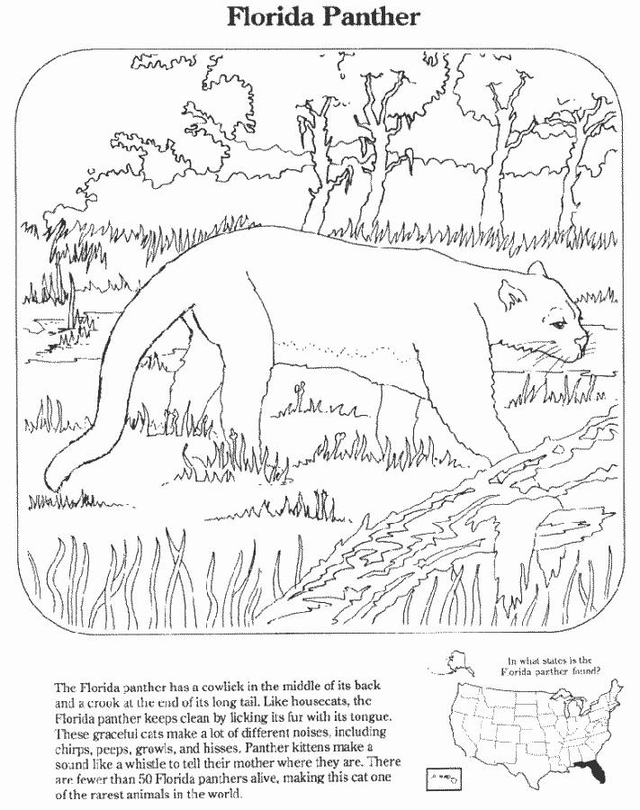 florida panther education coloring pages endangered species florida. Black Bedroom Furniture Sets. Home Design Ideas