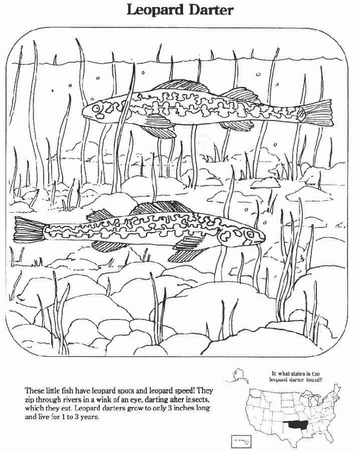 Leopard Darter Education Coloring_pages Endangered