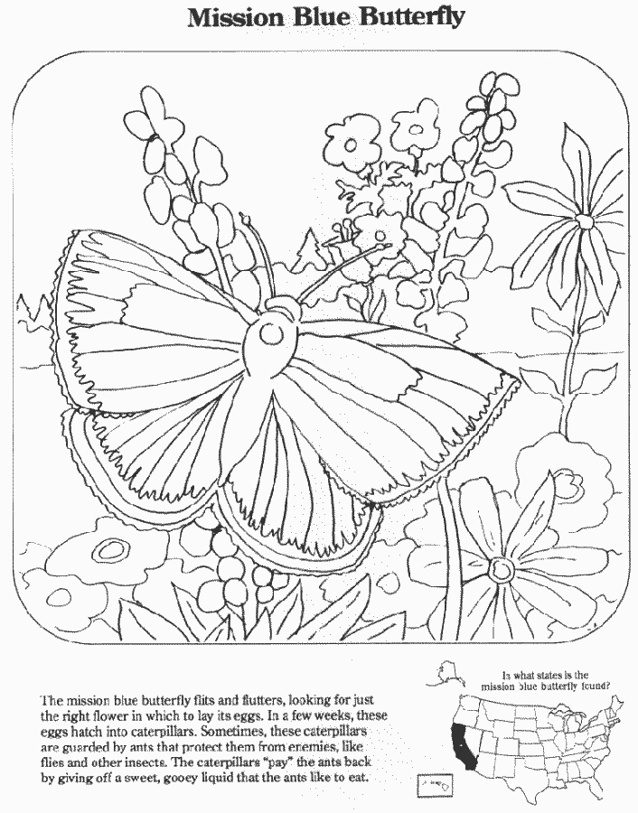 Mission Blue Butterfly educationcoloring pages