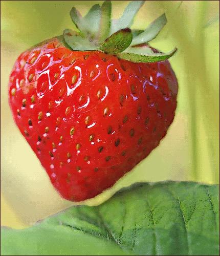 strawberry 08