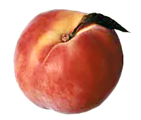 peach picture - /food/fruit/peach/peach_picture.png.html