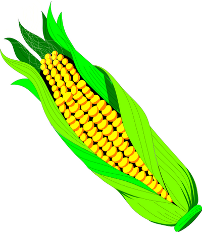 EAR OF CORN - public domain clip art image