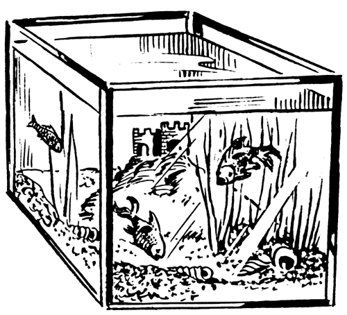 Fish Aquarium Clipart Black And White Hen