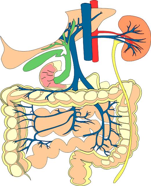 digestive system diagram for kids. digestive system diagram kids.