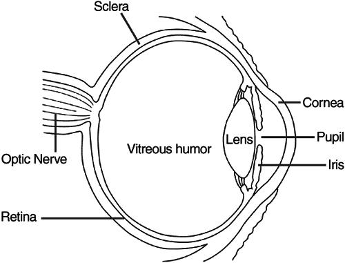 Eye Diagram 2  Medical  Anatomy  Eye  Eye Diagram 2 Png Html