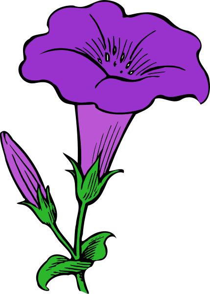 Flower Gamopetalous  Plants  Flowers  Flower Gamopetalous
