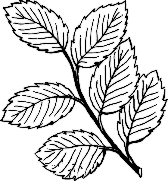 free clip art flowers black and white. free clip art flowers lack