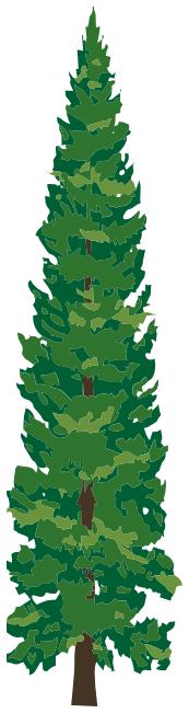 pine tree 1 - /plants/trees/evergreen/tall_pines/pine_tree_1.png.html