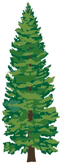 pine tree 2 - /plants/trees/evergreen/tall_pines/pine_tree ...