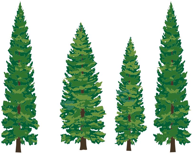 pine trees - /p...