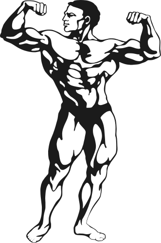 fitness muscle man - /recreation/fitness/weights/fitness ...