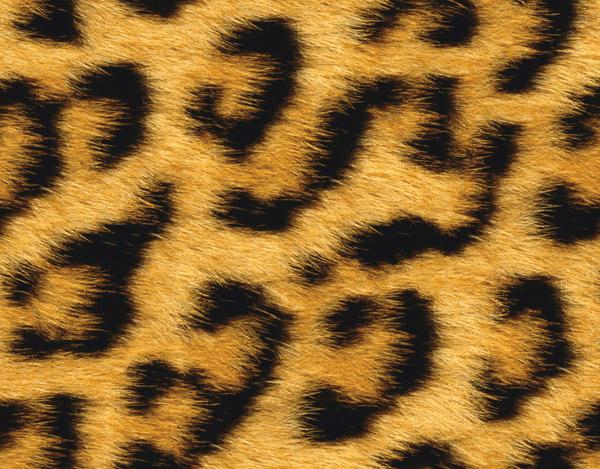 leopard fur - /textures/animal/animal_spots/leopard_fur.png.html: www.wpclipart.com/textures/animal/animal_spots/leopard_fur.png.html
